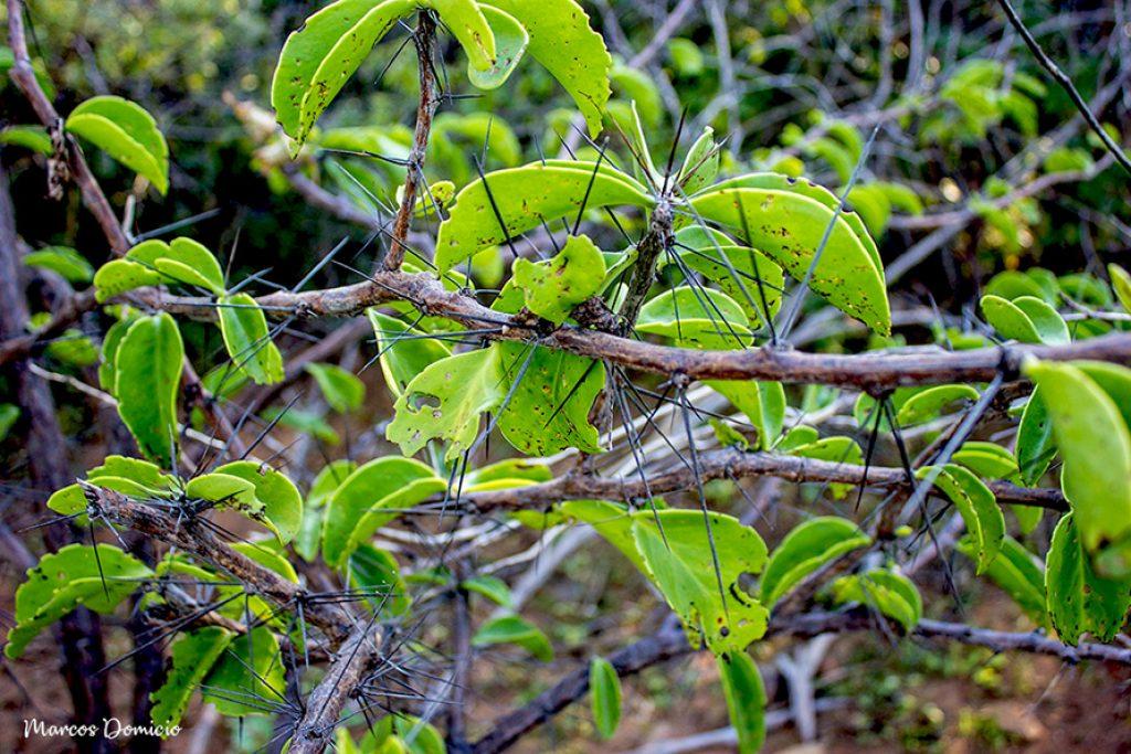 Quiabento Vegetação Caatinga e Cerrado de Paramirim